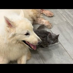 Cat and dog friendly home